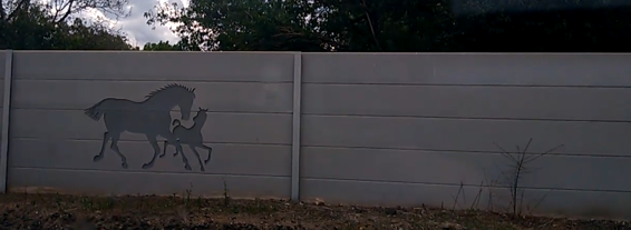 Horses on fence.png